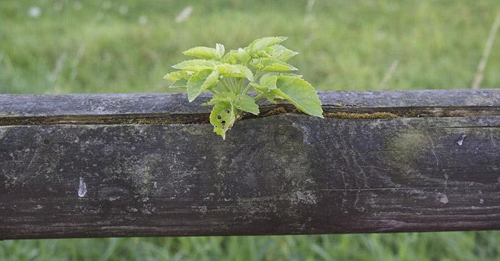 plant-1690640_1280