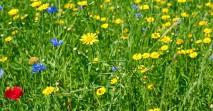 flowers-1481037_1280
