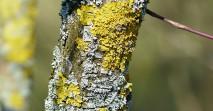 lichen-100434_1280